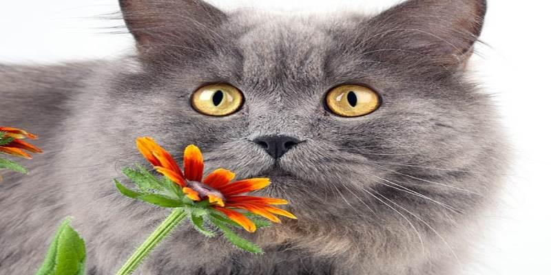 Лечение экземы у кошек в домашних условиях — мокнущая болячка у кошки
